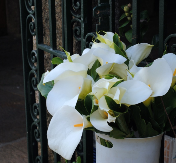 Calla lilies seemed to be everywhere in Santiago.